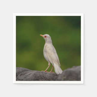 Albino Robin im Kronen-Punkt Serviette