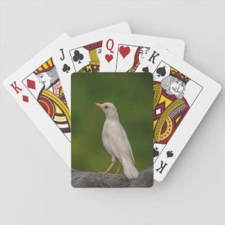 Albino Robin im Kronen-Punkt Spielkarten