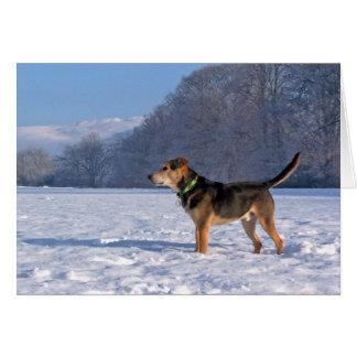 Alfie im Schnee Notecard Karte