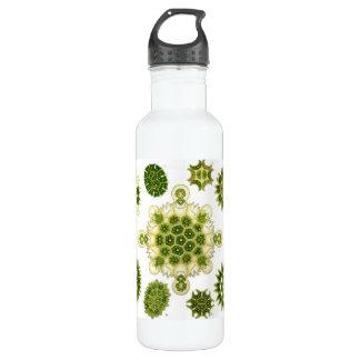 Algen Trinkflaschen