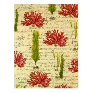 Algen und Chor- Postkarte