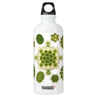 Algen Wasserflaschen