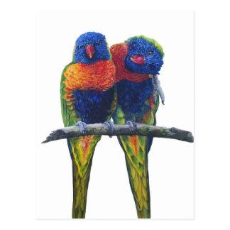 Alle Farben des Regenbogens Lorikeets Postkarte