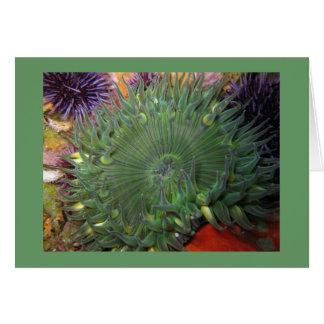 Alleine grüne Anemone Karte