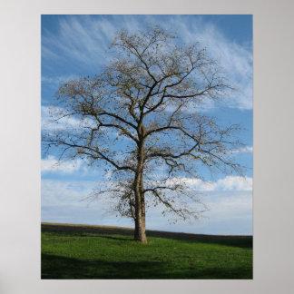 Alleiner Baum auf dem Hügel Poster