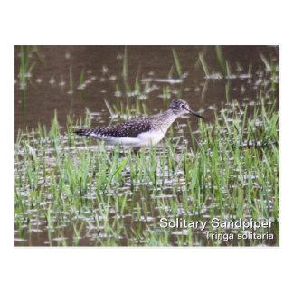 Alleiner Flussuferläufer Postkarte