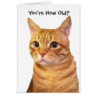 Alles Gute zum Geburtstag in Katzen-Jahre Karte