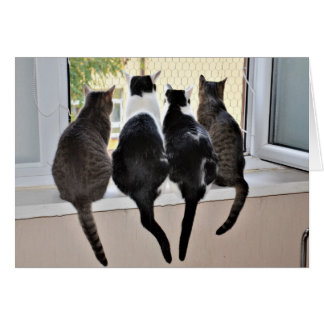 Alles- Gute zum Geburtstagkatzen-Liebhaber-Karte Karte