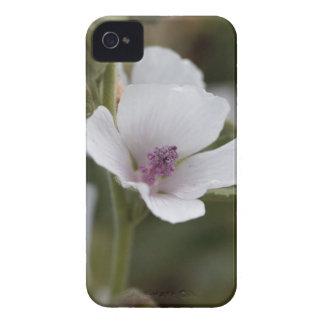 Allgemeine Sumpfmalve, Althaea officinalis Case-Mate iPhone 4 Hülle
