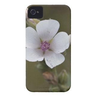 Allgemeine Sumpfmalve, Althaea officinalis iPhone 4 Hüllen