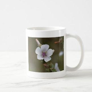 Allgemeine Sumpfmalve, Althaea officinalis Kaffeetasse