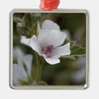 Allgemeine Sumpfmalve, Althaea officinalis Silbernes Ornament