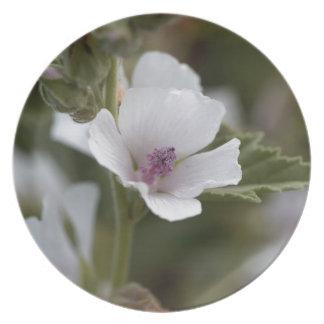 Allgemeine Sumpfmalve, Althaea officinalis Teller