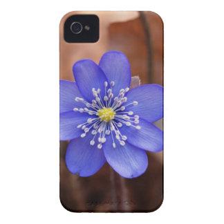 Allgemeines Hepatica (Hepatica nobilis) iPhone 4 Case-Mate Hülle