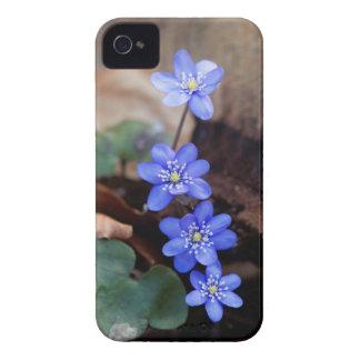 Allgemeines Hepatica (Hepatica nobilis) iPhone 4 Case-Mate Hüllen