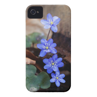 Allgemeines Hepatica (Hepatica nobilis) iPhone 4 Hülle
