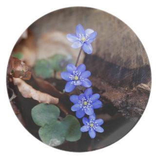 Allgemeines Hepatica (Hepatica nobilis) Melaminteller