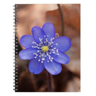 Allgemeines Hepatica (Hepatica nobilis) Notizblock