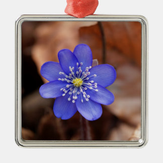 Allgemeines Hepatica (Hepatica nobilis) Quadratisches Silberfarbenes Ornament