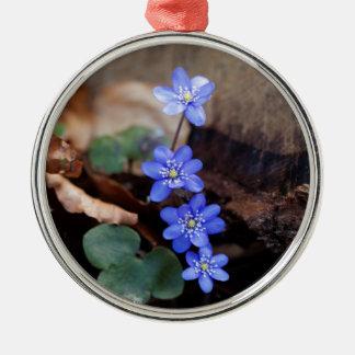 Allgemeines Hepatica (Hepatica nobilis) Rundes Silberfarbenes Ornament