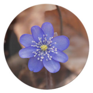 Allgemeines Hepatica (Hepatica nobilis) Teller