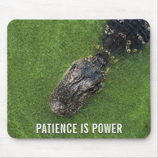 Alligator • Geduld ist Power • Florida-Natur Mousepad