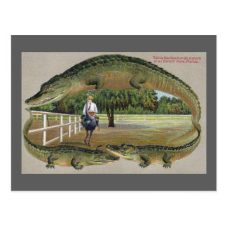 Alligatoren und Strauß-Bauernhof in Florida Postkarte