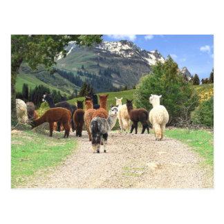 Alpaka-Hinterpostkarte Postkarte