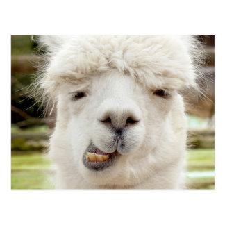 Alpaka-lustiges Gesicht Postkarten