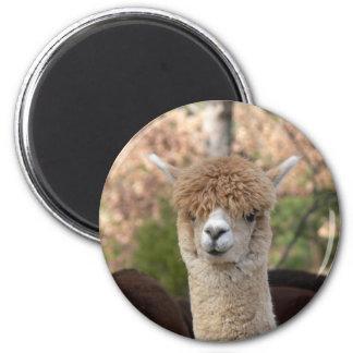 Alpaka-Schönheits-Magnet Runder Magnet 5,1 Cm