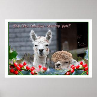 Alpaka-Weihnachten Poster