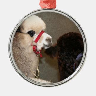 Alpakas an der Show Silbernes Ornament