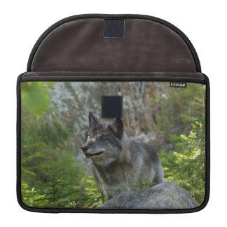 Alpha grauer Wolf-u. Waldtier-MacBook-Hülse Sleeve Für MacBooks