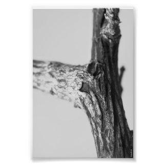 Alphabet-Buchstabe-Fotografie Y8 Schwarzweiss-4x6 Photo