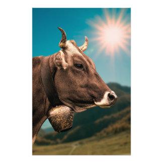 Alpine Kuh, die eine Glocke trägt Fotodruck
