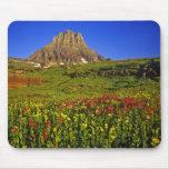 Alpine Wildblumen an Logan-Durchlauf im Gletscher Mauspad