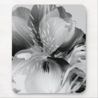 Alstroemeria-peruanische Lilien-Blume in Schwarzem Mousepad