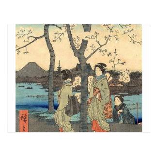 Alte japanische Frauen unter Kirschblüten Postkarte