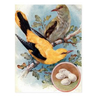 Alte Postkarte - goldener Oriole