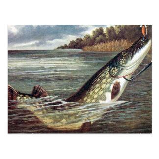 Alte Postkarte - Pike