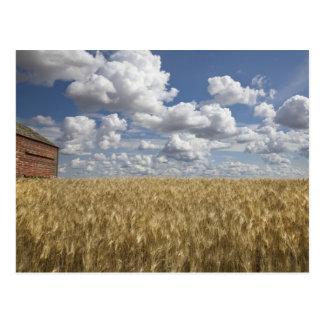 Alte Scheune auf Weizen-Gebiet 2 Postkarte
