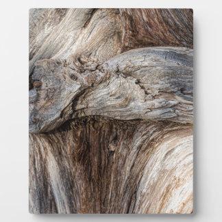 Alte Schlucht-Baum-Beschaffenheit Fotoplatte