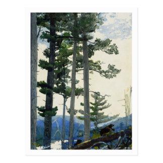 Alte Siedler durch Winslow Homer Postkarte