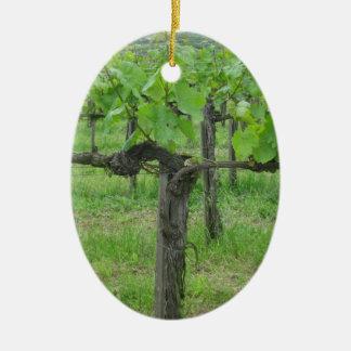 Alte Weinrebe Ovales Keramik Ornament