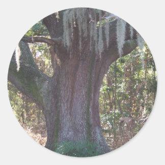 Alter Baum Runder Aufkleber