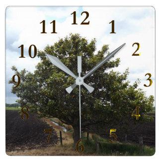 alter einsamer Bauernhofbaum Quadratische Wanduhr