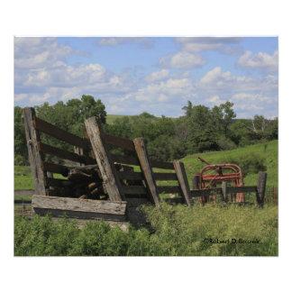 Altes Kansas-Vieh, das Trieb Foto-Erweiterung lädt Fotodruck