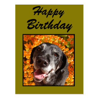 Altes schwarzes Labrador Postkarte