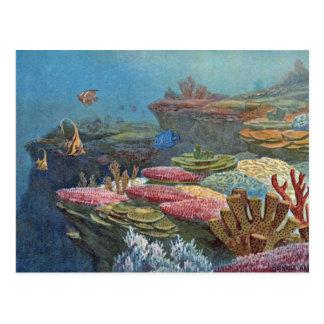 Altes Seekorallenroter antiker Druck Postkarte
