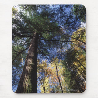 Altes Wachstums-Wald Mauspad